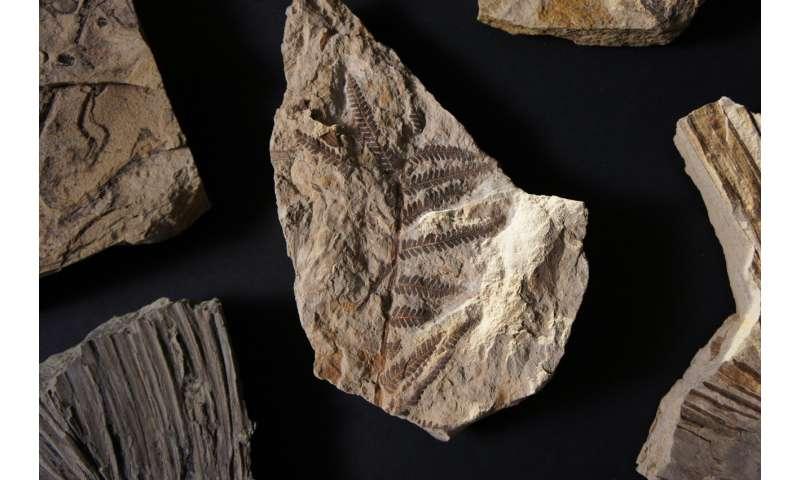 [Image: 3-fossiltroves.jpg]
