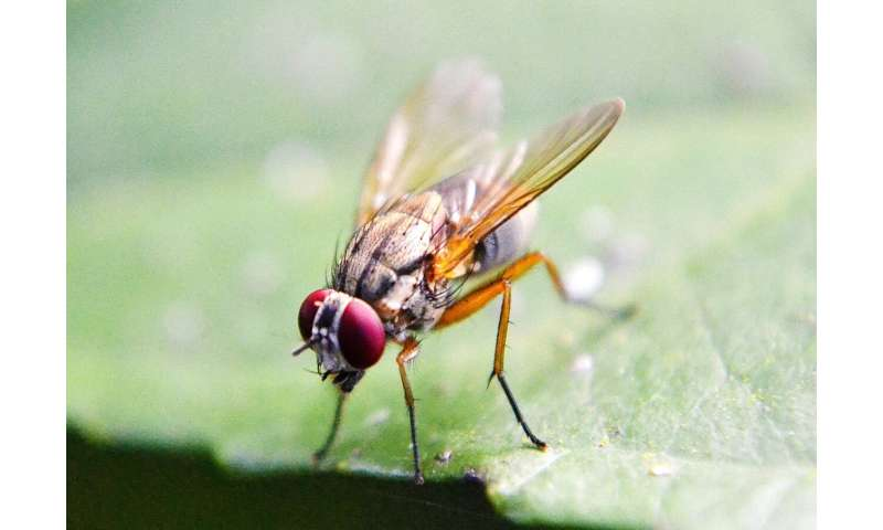 How a male fly knows when to make a move on a mate