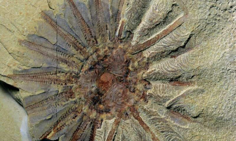 Half-a-billion-year-old fossil reveals the origins of comb jellies
