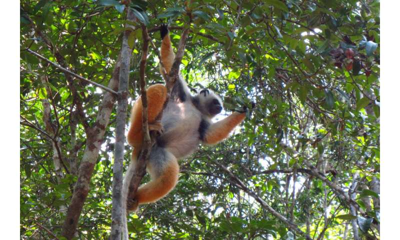 Halting biodiversity loss in Madagascar requires greater collaboration between researchers and managers
