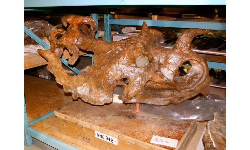 Hidden life revealed inside dinosaur bones