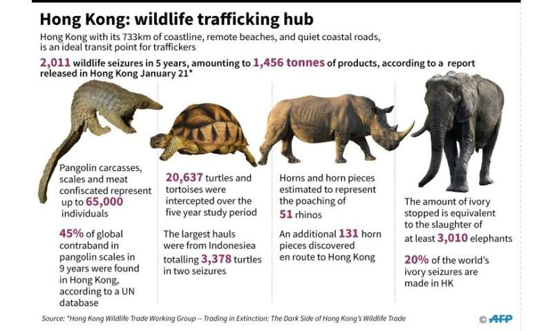 Hong Kong: wildlife trafficking hub