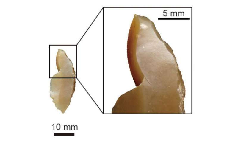 Insight into competitive advantage of modern humans over Neanderthals
