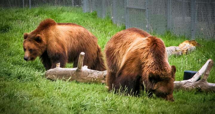 Learning from the bears