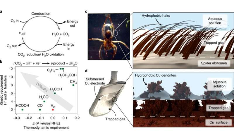 Mimicking the diving bell spider to improve CO2 conversion into fuels
