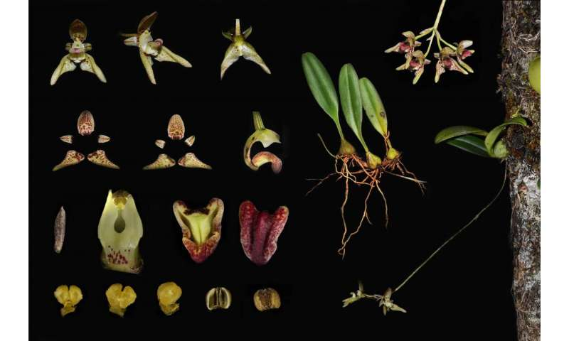 Plant diversity and endemism in China: Unreachable locations and diverse microclimates