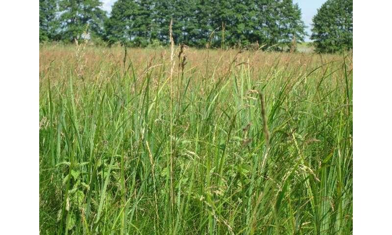 Poisonous grasses: new study provides reassurance