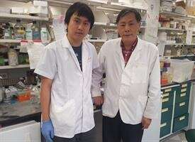 """Prostate Cancer Researchers Find Molecular """"Switch"""" to Prolong Survival"""
