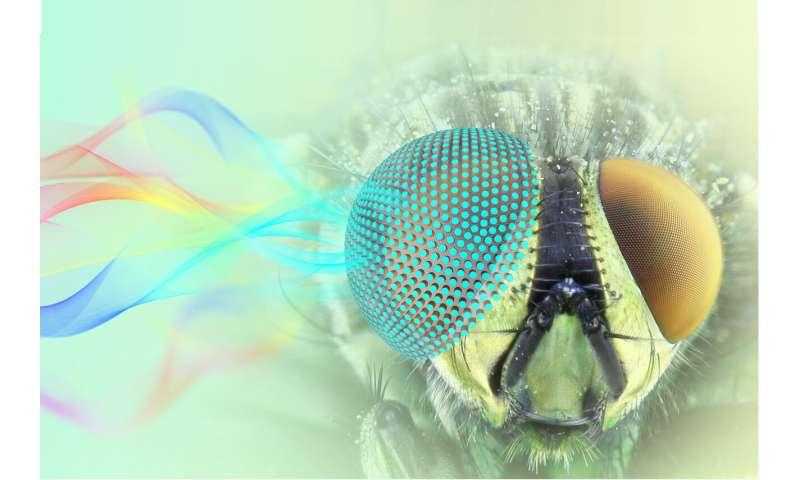 Researchers 3D print metamaterials with novel optical properties