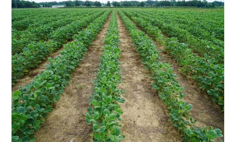 Research suggests glyphosate lowers pH of dicamba spray mixtures below acceptable levels