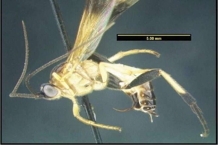 Revolutionary method could bring us much closer to the description of hyperdiverse faunas