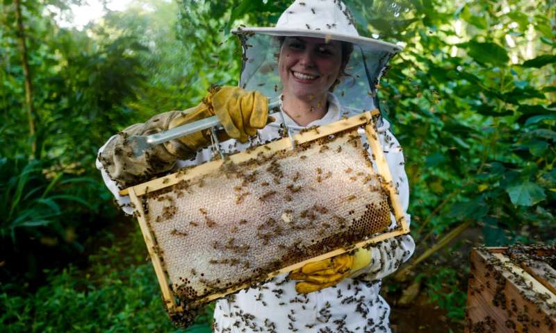 Saving bees, protecting forests and improving livelihoods