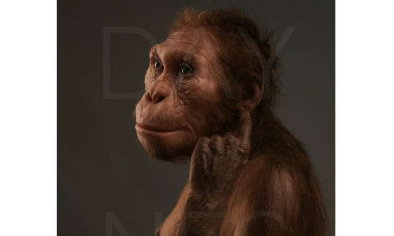 Scientists confirm pair of skeletons are from same early hominin species