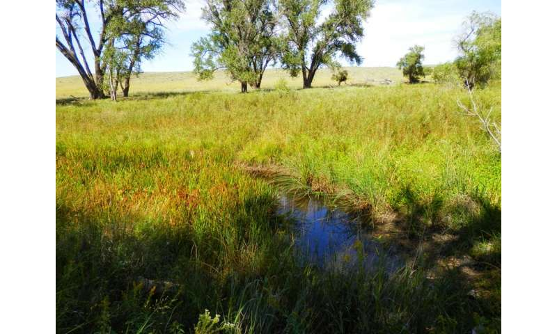 Small streams and wetlands are key parts of river networks – here's why they need protection