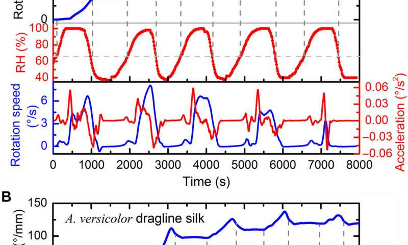 Spider dragline silk as torsional actuator driven by humidity for applications as artificial muscle