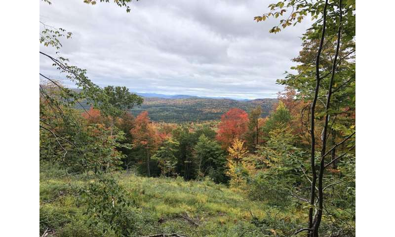Study finds managed forests in new hampshire rich in carbon