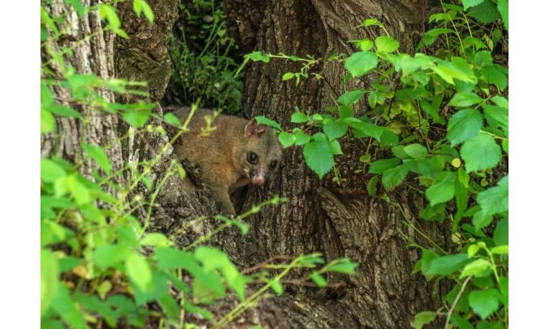 The science that stops possums eating your garden