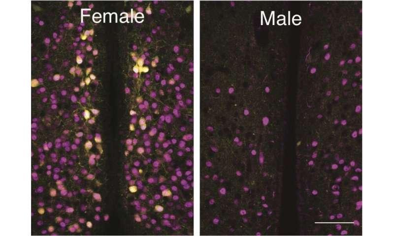 Scientists find clue to 'maternal instinct'