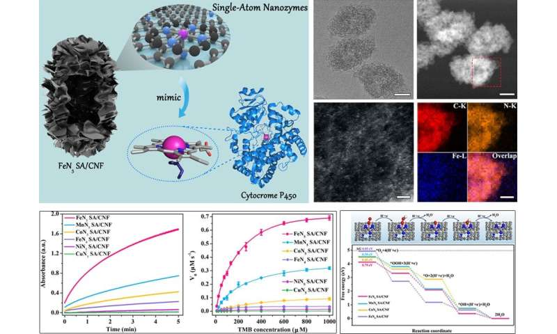 Scientists discover a new class of single-atom nanozymes