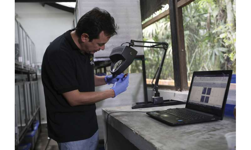 Colombian breeds rare frogs to undermine animal traffickers