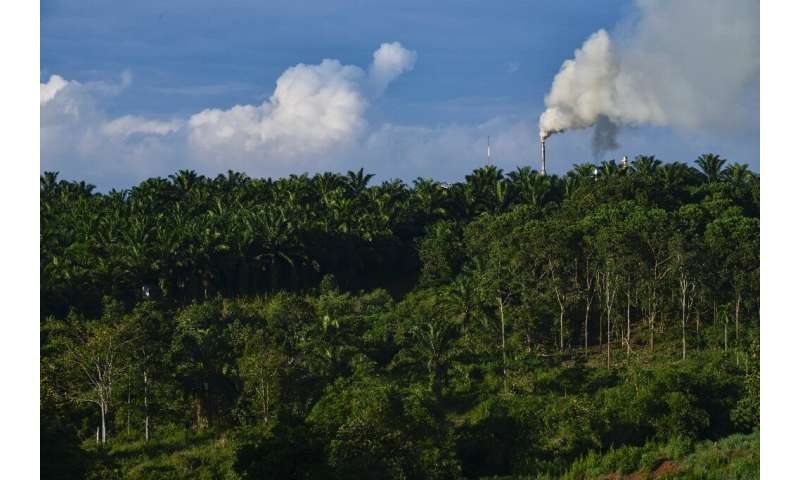 Environmentalists say palm oil drives deforestation, with vast areas of Southeast Asian rainforest logged in recent decades to m