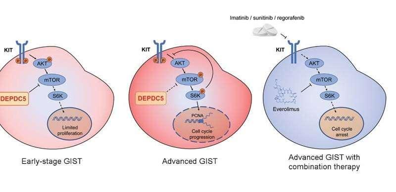 Scientists reveal novel oncogenic driver gene in human gastrointestinal stromal tumors