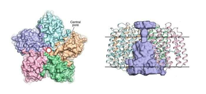 Scientists reveal the structure of viral rhodopsins