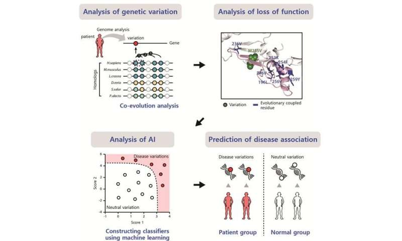 Evolutionary coupling analysis identifies the impact of disease-associated variants