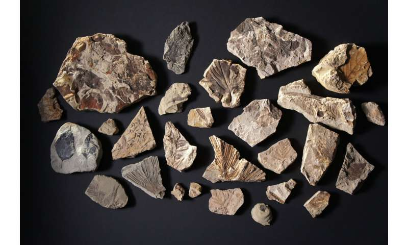 [Image: 4-fossiltroves.jpg]