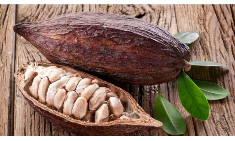 Improving the cacao genome and phytozome
