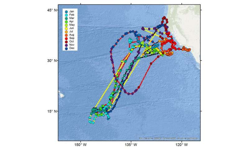 Mako shark tracking off west coast reveals 'impressive' memory and navigation