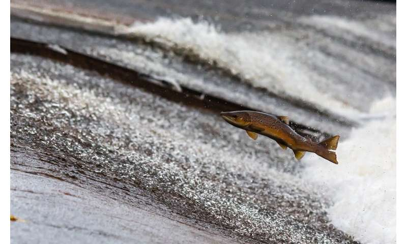 This Alaska mine could generate $1 billion a year. Is it worth the risk to salmon?