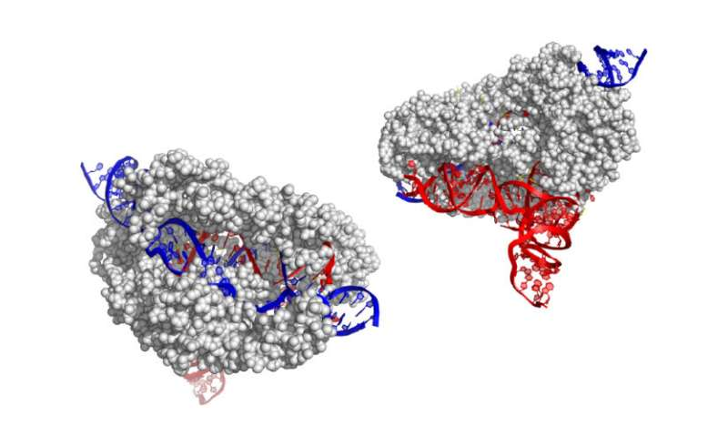 Scientists find new and smaller CRISPR gene editor: CasX