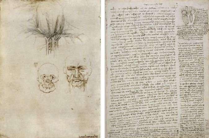 The body according to Leonardo da Vinci