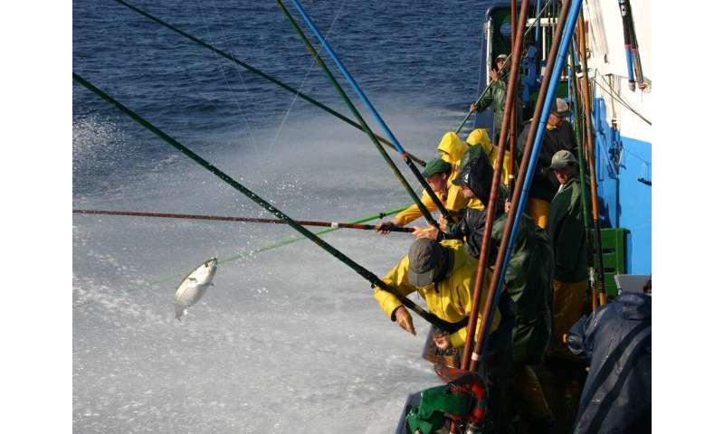 Climate change will redistribute tuna