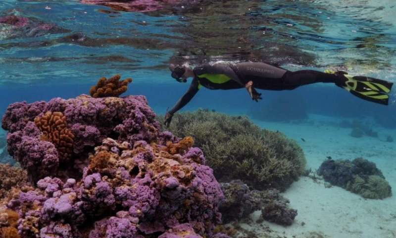 Researchers identify type of parasitic bacteria that saps corals of energy