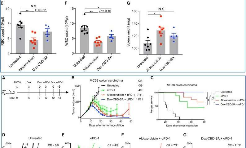Engineering collagen-binding serum albumin (CBD-SA) as a drug conjugate carrier for cancer therapy