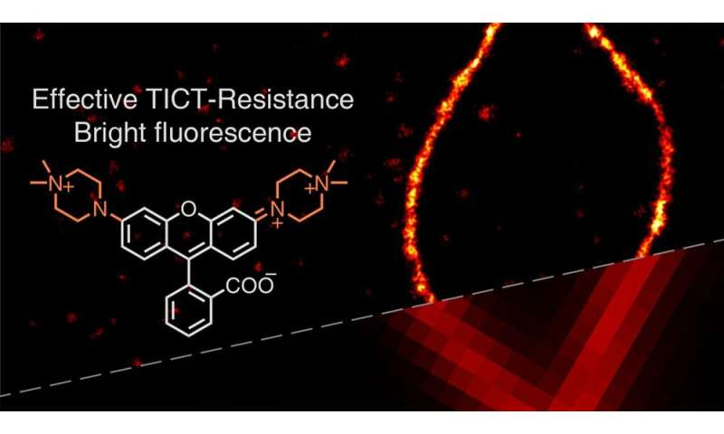 Illuminating the path for super-resolution imaging with improved rhodamine dyes