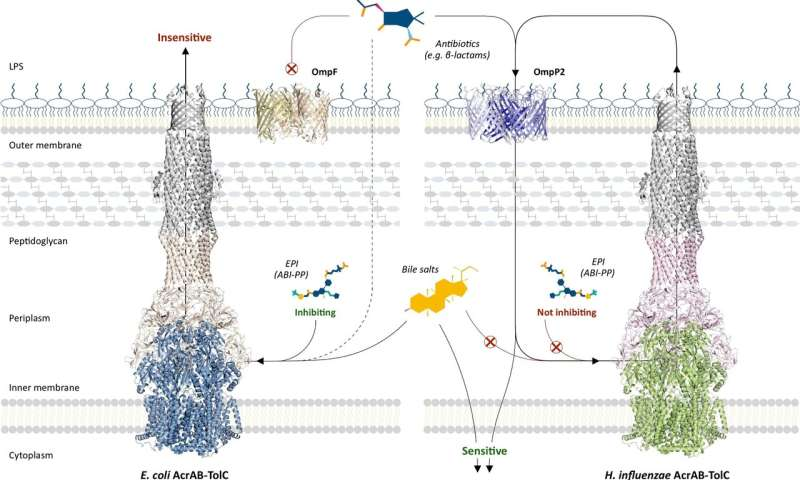 Multidrug resistance: Not as recent as we thought