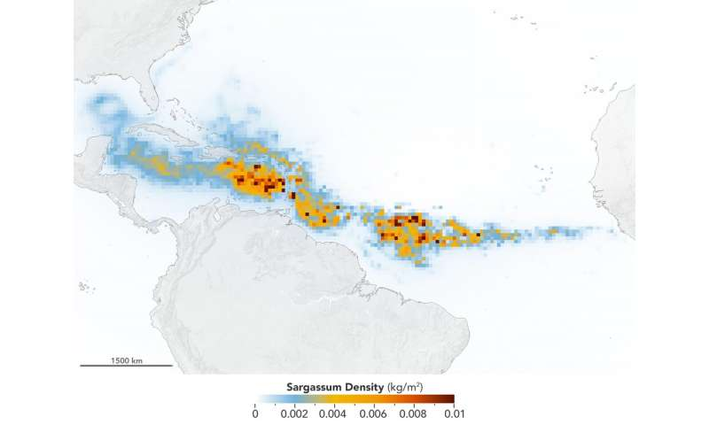 NASA satellites find biggest seaweed bloom in the world