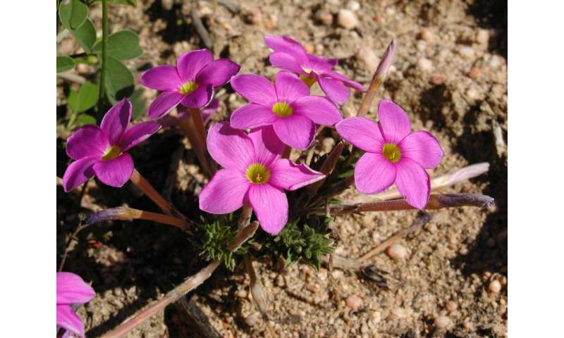 New evidence that bacteria drive biodiversity in the Cape Floral Region