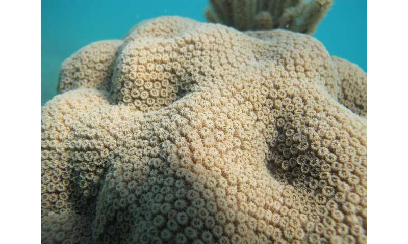 New study finds distinct microbes living next to corals
