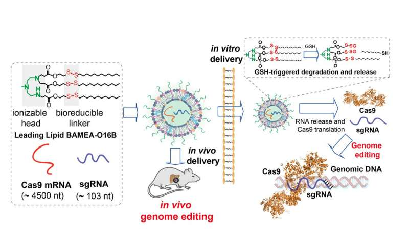 Novel nanoparticles deliver CRISPR gene editing tools into the cell with much higher efficiency