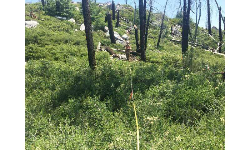 Plant diversity a casualty of high-severity wildfires