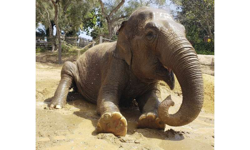 Santa Barbara Zoo's elderly elephant Little Mac euthanized