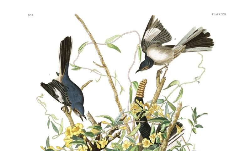 Sexual selection in action: Birds that attract multiple mates change their songs more quickly