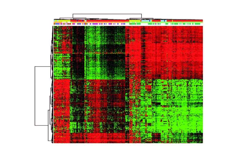 Researchers confirm the validity of xenographic models for studies of methylation