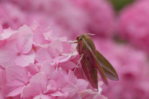 Scientists find no evidence for 'insect Armageddon' – but there's still cause for concern
