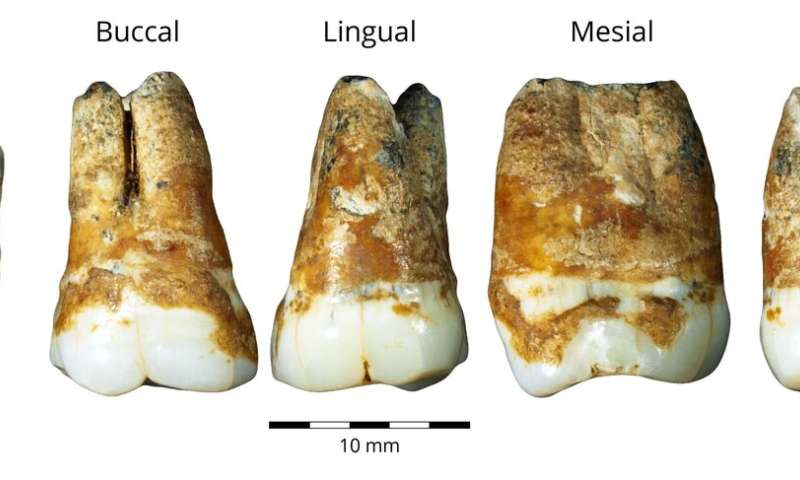 Study reveals that humans migrated from Europe to the Levant 40,000 years ago