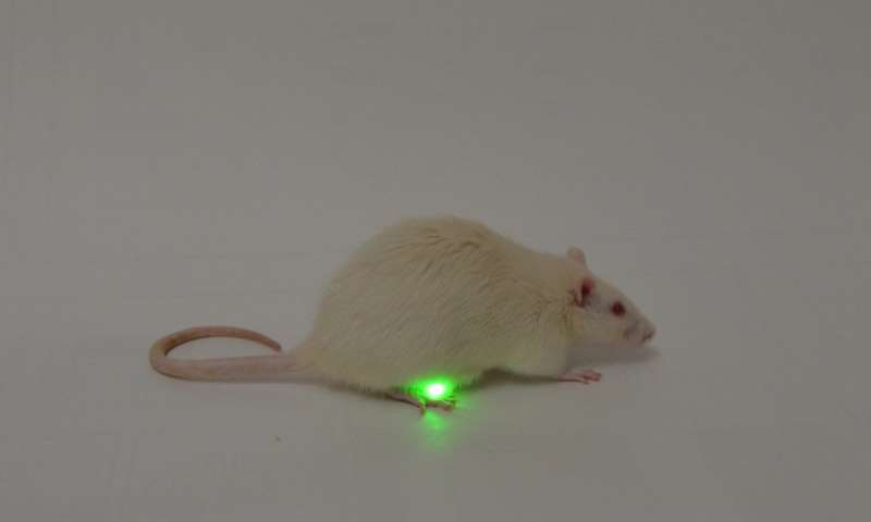 Tiny, implantable device uses light to treat bladder problems